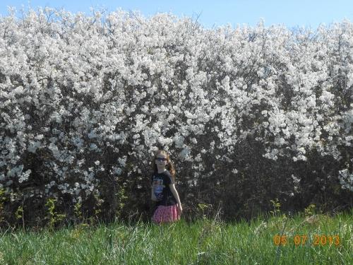 plum trees (1000x750)