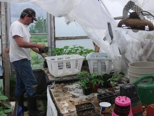 garden -greenhouse (1000x750)