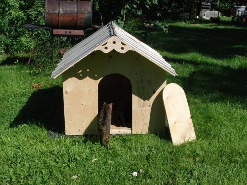 Daisy house cat (1000x750)