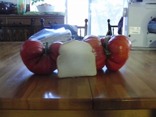 tomato 26 July (1000x750)