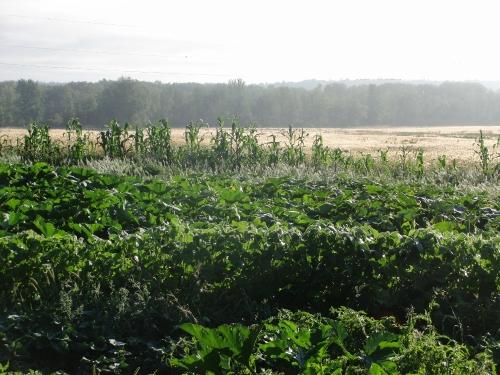 farm girl -9 Aug garden (1000x750)