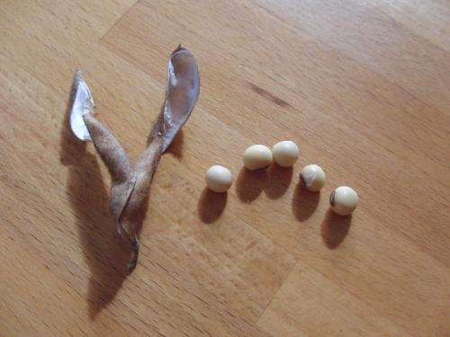 5 beans 2 (1000x750)